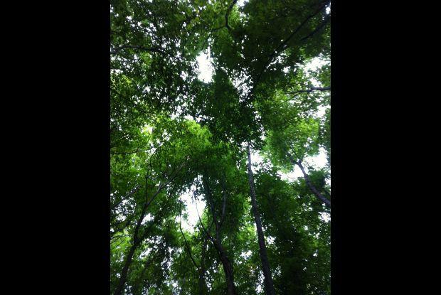Bild 3 von 3: Wald